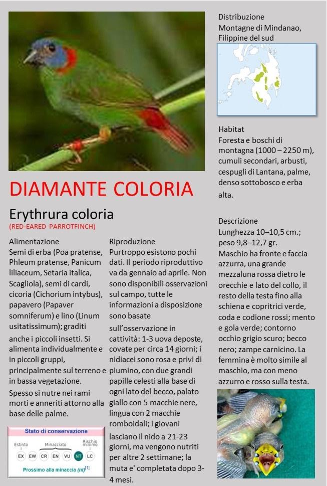 scheda Coloria